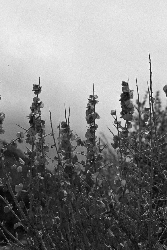 Photo of Desert Brush - Utah